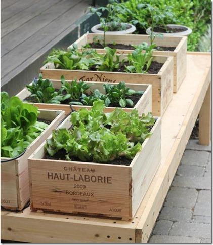 garden image2